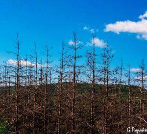 Село Горна Секирна Фотограф: Георги Папакочев